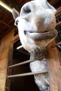 軽米の馬っこ - あちゃこちゃばやばや 2