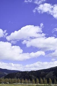 マキノのメタセコイア並木とフェルト作家・・・雛アラレ - 朽木小川より 「itiのデジカメ日記」 高島市の奥山・針畑郷からフォトエッセイ
