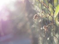 根底にある美意識 - 果実な日々