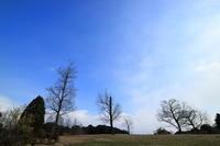 公園の広場を撮りました。青い空 撮りたいな。 - 平凡な日々の中で