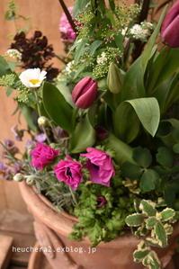 お祝いの寄せ植え - 小さな庭 2