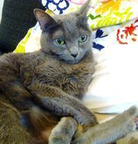 我が家の♀猫 - La Pousse(ラプス) フラワーアレンジメント教室