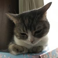 芸森版画工房 - 猫の銅版画