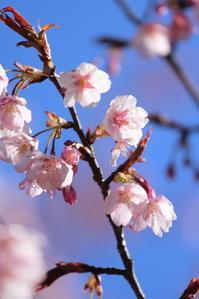 草春の花々 - i feel fine