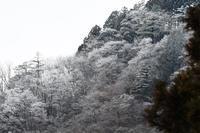 2017年2月 - 青梅から花鳥風景
