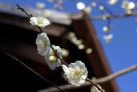 東風吹かば - 京都ときどき沖縄ところにより気まぐれ
