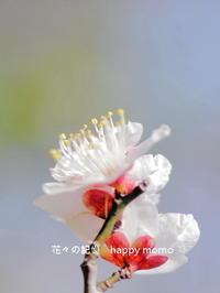 眩しい朝に - 花々の記憶
