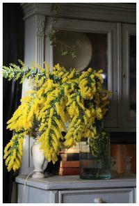 mimosa満開です❤ - natu     * 素敵なナチュラルガーデンから~*     福岡県で庭の施工、外構造りをしてます