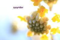 暖かな春の光 - ジージーライダーの自然彩彩