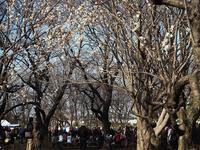 """赤塚公園の""""梅まつり""""に参戦 - デジカメ一眼レフ開眼への道"""