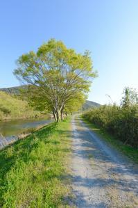 木の一生 - 写真家 田島源夫ブログ『しゃごころでっしゃろ!』