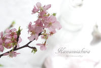リビングに春、河津桜の一枝♪ - きれいの瞬間~写真で伝えるstory~