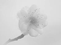 悩みは尽きぬ - 1/365 - WEBにしきんBlog