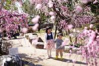 春の訪れを実感できるところ - 家族の風景