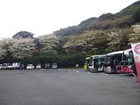伊豆大島 大島公園散策 - 風の便り