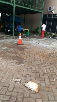 スーパーの駐輪場にて - ママハナのロンボク日記 Dua