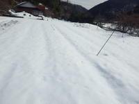雪の上から玉ねぎに追肥しました。 - チドルばぁばの家庭菜園日誌パート2