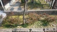 家の木たち - 自分流 Happy Life