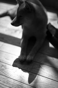 shadow (4cut) sakura&waku -     ~風に乗って~    Present
