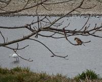 浅川一番橋付近、鳥が多い。 - 多摩平お散歩日記