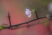 春の足音 - kzking1963 Digital Photo Diary