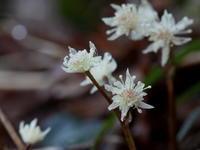 早春賦 その1 - 自然がいっぱい3