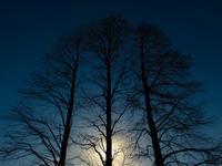☆ soul tree ☆ - ON ANY SUNDAY 2.............