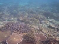 5年。 - 沖縄本島最南端・糸満の水中世界をご案内!「海の遊び処 なかゆくい」