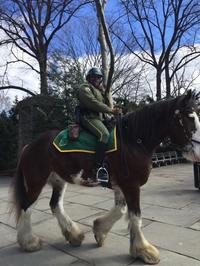 なぜか馬が似合う街〜ニューヨーク - ニューヨーク適度にテキトー生活
