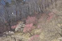 昨日 春を撮りに - お花びより