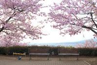 桜のベンチ。。。 - DAIGOの記憶
