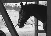 253鞍目 久々のマンツー - 美味しい時間と馬と犬
