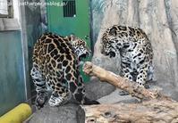 2017年2月 天王寺動物園 その3 - ハープの徒然草