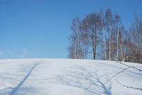 スノーシューで丘めぐり・美瑛2日目 - ふわふわ羊の布つくり