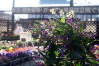 花の名は - 役に立ちそうでなかなか役に立たないような気がするブログ
