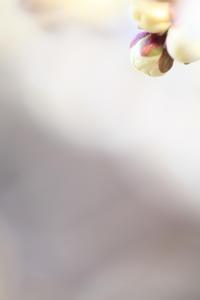 北野天満宮の梅  その6 - 春の風