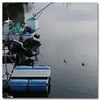 #2119 水鳥 - at the port