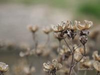 冬の欠片 - 瞳の記憶