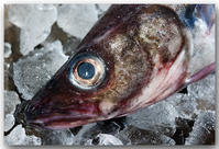 介党鱈/スケトウダラ ............ スケソウダラ(助宗鱈)とも呼ばれます - 魚屋三代目日記