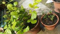 庭は良いネ~ - mintoの毎日
