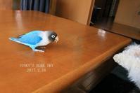 B.B & Chipo* おやつ実験!?・Ⅲ - FUNKY'S BLUE SKY