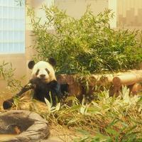 panda - eico's photo gallery