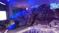 沼津深海水族館に行ってみた。 - 言 壺。