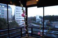 ひな祭りのkameplan Bar @新宿ハウス〜森のうえ - 週末は晴れても、雨でも
