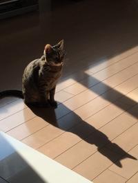 影はハンサム - MIYAKO BEAR