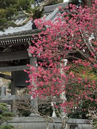 鎌倉で春の訪れを感じました。 - ご無沙汰写真館