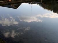 早春賦 その3 水の中では・・・ - 自然がいっぱい3