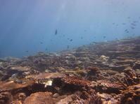 3月5日はサンゴの日 - 沖縄本島最南端・糸満の水中世界をご案内!「海の遊び処 なかゆくい」