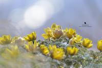 空気を撮る - お花びより