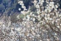 春模様 - かにさんの横歩き散歩日記